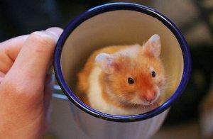hamster_coffee